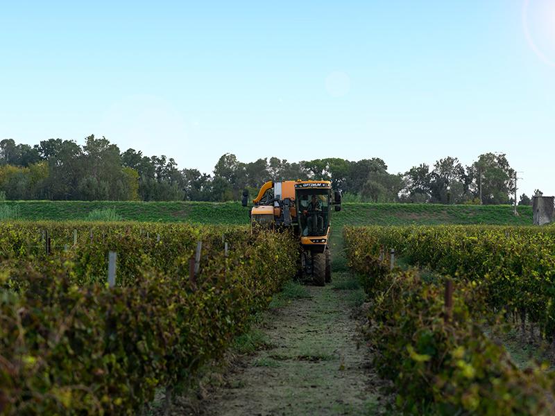 Engin agricole dans le vignoble du Domaine de Mas de Rey