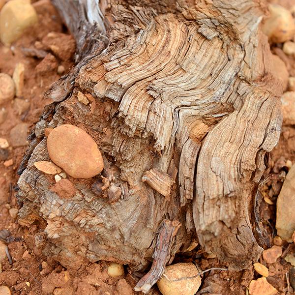 Zoom sur la terre du vignoble du Domaine de Mas de Rey